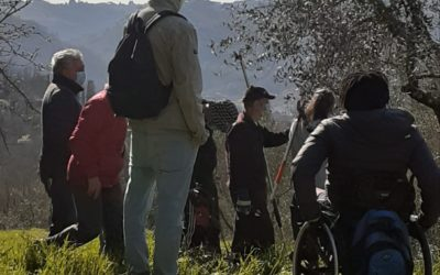 Workshop potatura degli ulivi